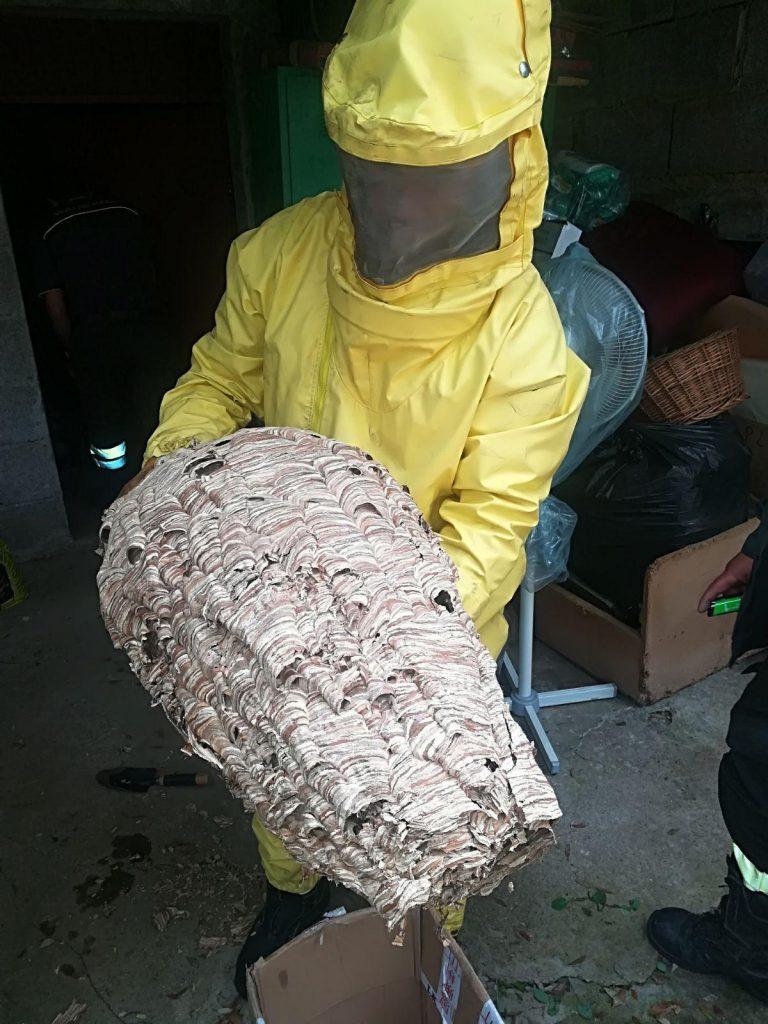 Rimozione nidi di calabroni parma